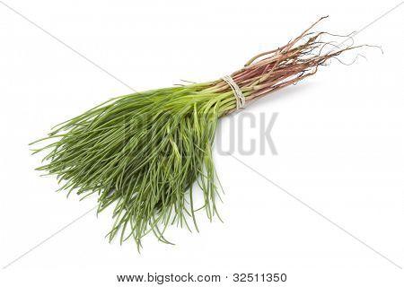 Bunch of fresh Saltwort on white background