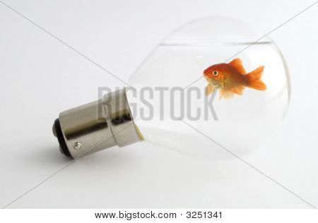 Goldfish In Light Bulb