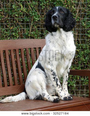 Dog On Garden Bench