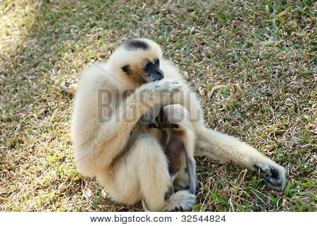 The Monkey With Baby