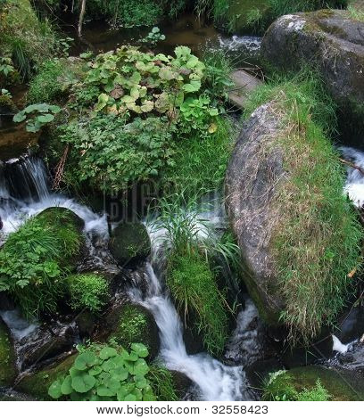 Overgrown Triberg Waterfalls Detail