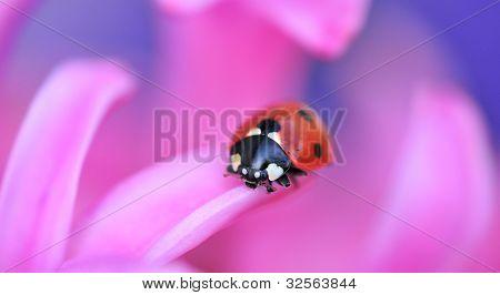 ladybird on pink flower