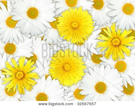 Background Of Yellow And White Flowers