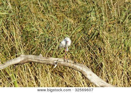 Background with bird