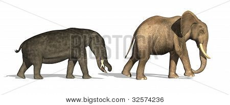 Platybelodon And Elephant Compared