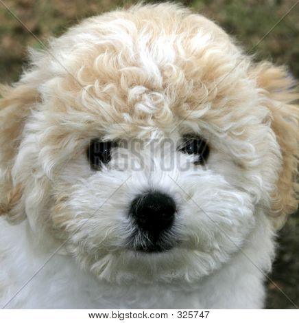 Puppy 104