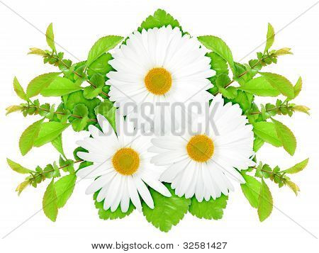 Three White Flowers With Green Leaf