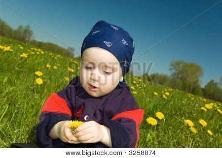 Small Boy Studies Dandelion