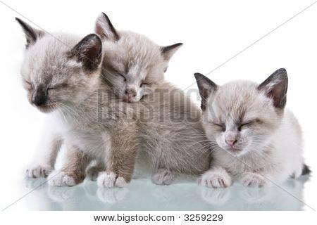 Baby Kätzchen schlafen