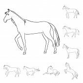 Vector Illustration Of Stallion And Galloping Icon. Set Of Stallion And Riding Stock Symbol For Web. poster