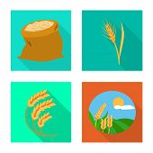 Vector Illustration Of Grain And Harvest Icon. Collection Of Grain And Agriculture Stock Vector Illu poster