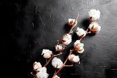 Cotton Plant. Branches Of White Fluffy Cotton Flowers On Dark Black Stone Background. Organic Materi poster