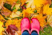 Rainy Autumn. Rubber Pink Boots Against Of Wet Yellow Leaves.conceptual Image Of Legs In Boots On Th poster