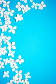 Floral Pattern With Small Petals Hydrangea And Petals On Blue Trendy Pastel Background. Flower Patte poster