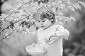 Organic Nutrition. Healthy Nutrition Concept. Nutrition Habits. Kid Hold Spoon. Small Child Enjoy Ho poster