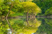 Panorama From Amazon Rainforest, Brazilian Wetland Region. Navigable Lagoon. South America Landmark. poster