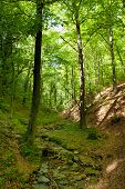 stock photo of centenarian  - Creek In The Woods In Spring - JPG