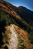 Seasonal Background Mountain Walkway To Autumn Landscape poster