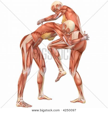 Female Human Body Anatomy-Street Fight