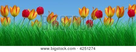 Green Grass And Tulips