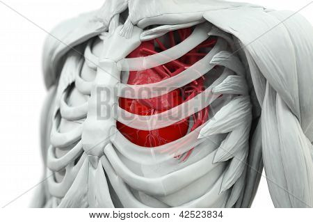 Torso With Heart