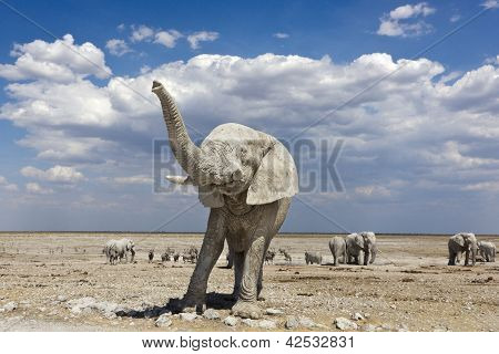 Elephant Namibia Trunk