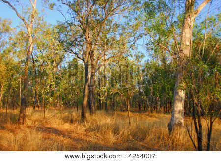 Outback Grasslands