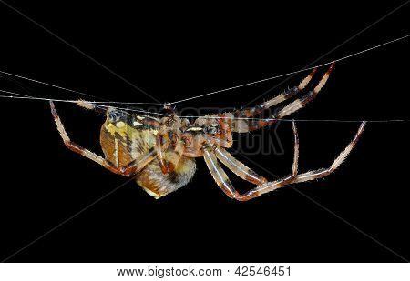 Spider On Spider-web