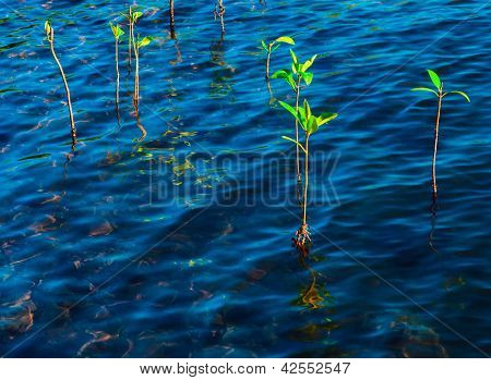 Plants in blue water