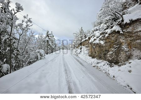 Winter road and trees covered with snow