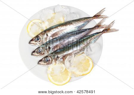 Three Raw Mackerel In Ice And Lemon. On A White Background.