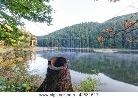 Stump Against The Morning Lake Synevir.