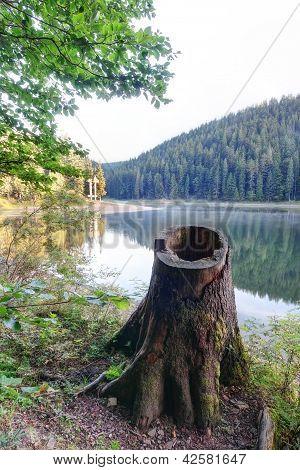 Cerca de tocón de árbol de mañana Lago Synevir.