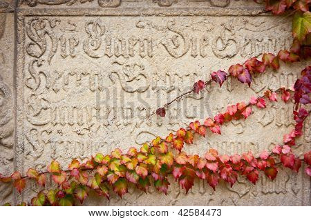 Inscription And Ivy