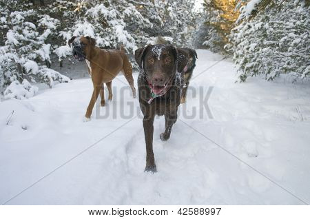 Winter Dog Walk