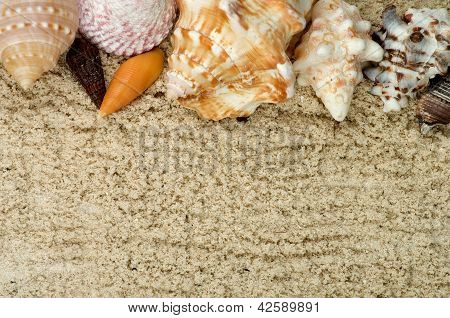 Frame Of Conch Sea Shell