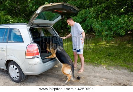Dog Getting Into A Car