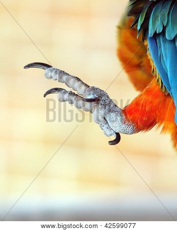 Talons of a parrot