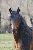picture of horse face  - Portrait of a hairy horse with a large mane - JPG