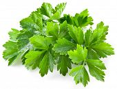 stock photo of cilantro  - Bunch of green coriander on a white background - JPG