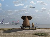 stock photo of aborigines  - elephant and dog sitting at the airport - JPG