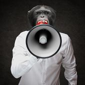 picture of ape-man  - Man With Monkey Head Shouting Through Megaphone On Black Background - JPG