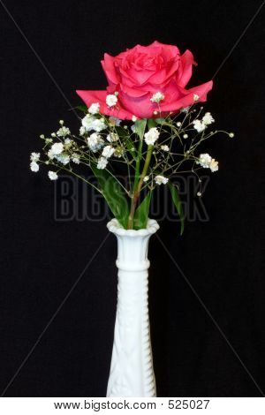 Solo Pink Rose