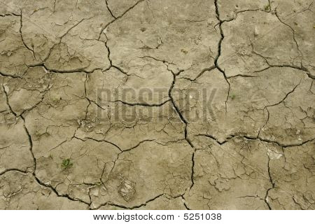 Field After Drought