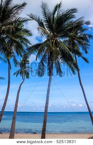 Palms on Haad Khom beach