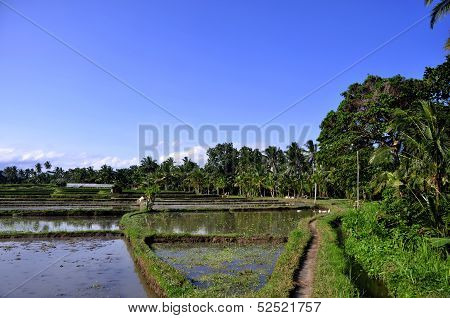 Dirt path on Ricefields