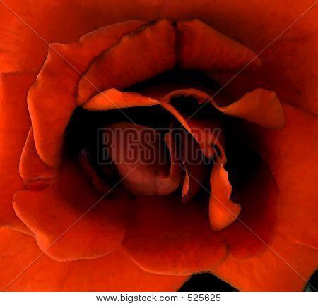 Dark Blood Red Rose