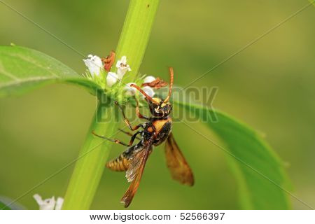 Hornet Flower-counting In The Wild