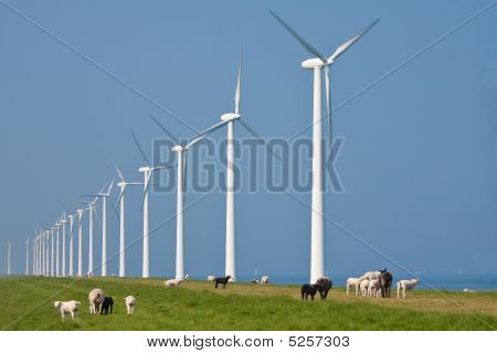 Sheep And Windmill