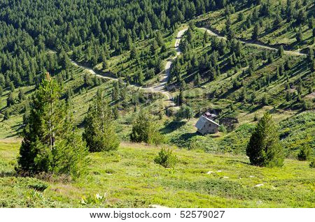 macedonian pine and road mountain in the Pelister National Park, Republic of Macedonia